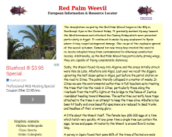 Red Palm Weevil                     Information